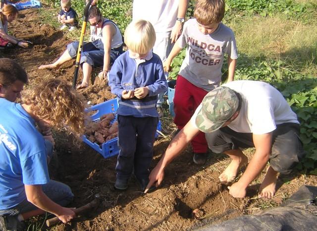 house church digging sweet potatoes