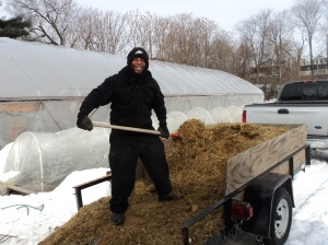 Kirk C. moving horse manure for the compost hot beds